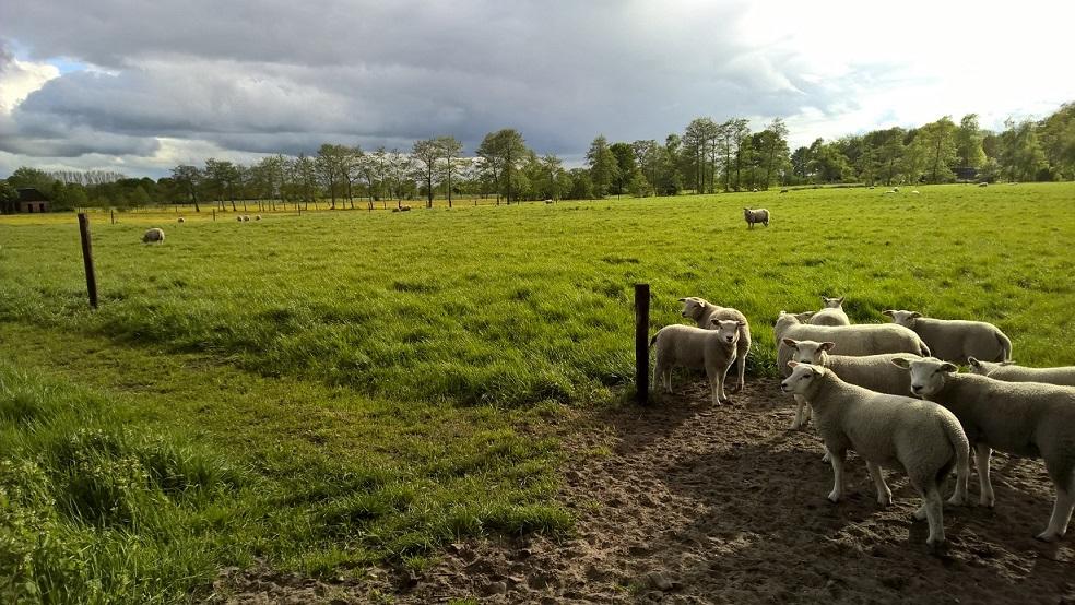 Overnachten-platteland-groningen-gastenboerderij-lucaswolde
