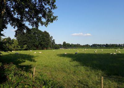 bedandbreakfast-platteland-lucaswolde-groningen